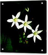Those Little Flowers Acrylic Print