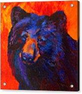 Thoughtful - Black Bear Acrylic Print