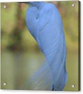 Thoughtful Heron Acrylic Print