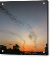 Thousands Of Tourist And Bat Watchers Gather On The Congress Avenue Bridge To Watch A Black Cloud Of 1.5 Million Mexican Free-tailed Bats Fly Away For Their Nightly Feast On Mosquitoes And Other Insec Acrylic Print
