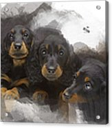 Three Adorable Black And Tan Dachshund Puppies Acrylic Print