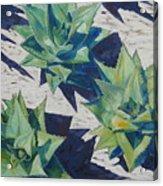 Three Aloe Acrylic Print