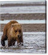 Three Bears Acrylic Print