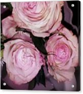 Three Beautiful Roses Acrylic Print