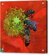 Three Bees At Lunch Acrylic Print