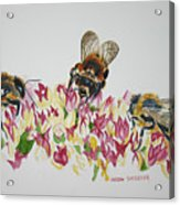 Three Beez Acrylic Print