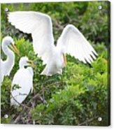 Three Birds Of A Feather Flock Together Acrylic Print