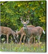 Three Bucks_0054_4463 Acrylic Print