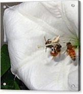 Three Busy Bees Acrylic Print