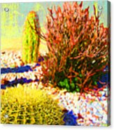 Three Cacti Acrylic Print