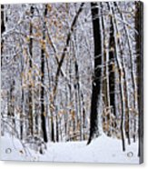 Three Creeks Conservation Area - Winter Acrylic Print