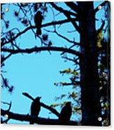 Three Crows In A Tree Acrylic Print