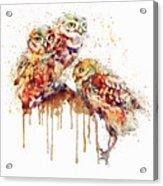Three Cute Owls Watercolor Acrylic Print