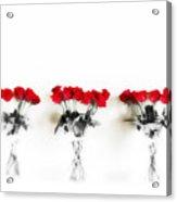 Three Dozen Roses Acrylic Print