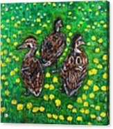 Three Ducklings Acrylic Print