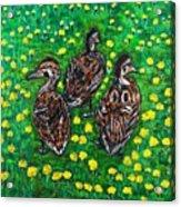 Three Ducklings Acrylic Print