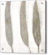 Three Eucalyptus Leaves Acrylic Print by Carol Leigh