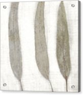 Three Eucalyptus Leaves Acrylic Print