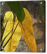 Three Exotic Leaves Acrylic Print