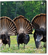Three Fans Acrylic Print by Todd Hostetter