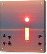 Three Geese Flying By The Sunrise  Acrylic Print