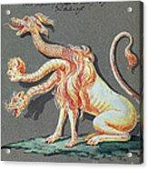 Three Headed Monster, 18th Century Acrylic Print