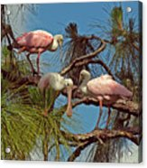 Three In A Tree Acrylic Print