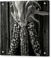 Three Indian Corn In Black And White Acrylic Print