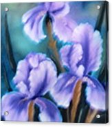 Three Iris Acrylic Print