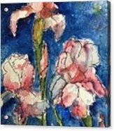 Three  Iris' Acrylic Print