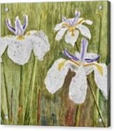 Three Irises In The Rain Acrylic Print
