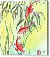 Three Koi Acrylic Print