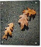 Three Oak Leaves Acrylic Print