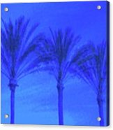 Three Palms And One Flag Acrylic Print