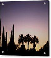 Three Palms In California At Sunset Acrylic Print