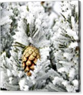 Three Pinecones Acrylic Print