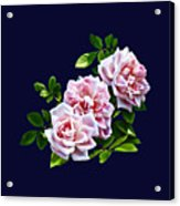 Three Pink Roses With Leaves Acrylic Print