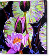 Three Purple Lilies Acrylic Print