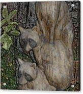Three Raccoons Acrylic Print