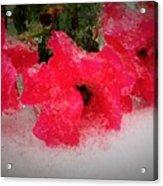 Three Rose Crystals  Acrylic Print