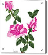 Three Roses In The Garden Acrylic Print