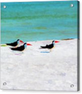 Three Skimmers Acrylic Print