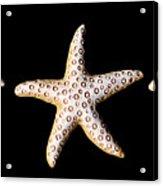 Three Stars - Sepia Acrylic Print by Zoe Ferrie