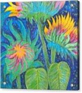 Three Sunflowers In The Mid Summer Night  Acrylic Print