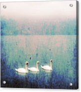 Three Swans Acrylic Print by Joana Kruse
