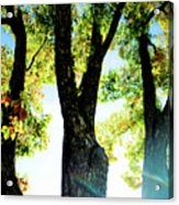 Three Tree Light Acrylic Print