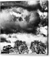 Three Tree Tops Landscape Acrylic Print
