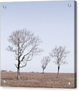 Three Trees - Nantucket Acrylic Print
