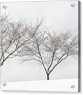 Three Trees In A Snowstorm Acrylic Print