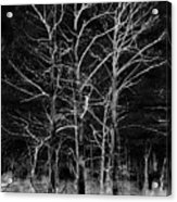 Three Trees In Black And White Acrylic Print